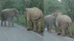 Male Elephants Confrontation On Road [Video]