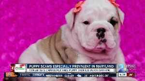 12 Scams of Christmas: Puppy scams [Video]