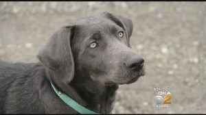 Family's Missing Dog Returns On Daughter's 13th Birthday [Video]