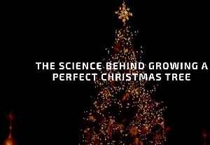 How To Grow A Perfect Christmas Tree [Video]