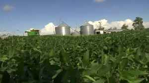 China makes first big U.S. soybean purchase since Trump-Xi truce [Video]