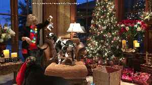 Cat & puppy play with new Christmas gifts [Video]