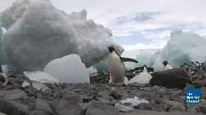 Don't Play Hide-and-Seek With a Penguin [Video]