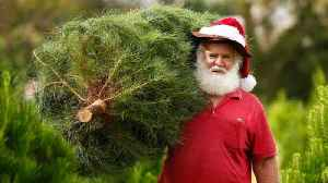 Fake Christmas Trees Are More Popular, But Are They Better? [Video]