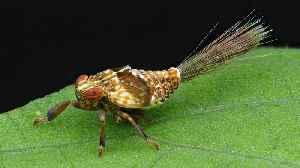 Planthopper nymph with Jet propulsion [Video]