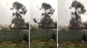 Teenager left terrified as power line hits tree causing deadly sparks� [Video]