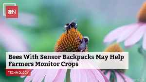 Bees And Tech May Be The New Future Of Farming [Video]