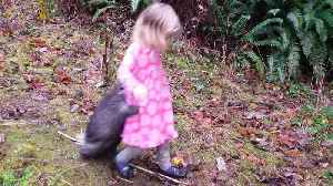 Pet Porcupine Holds onto Little Girl While Walking [Video]