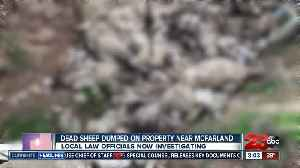Dozens of dead sheep illegally dumped on McFarlan property [Video]