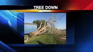 Combes Tree Down [Video]