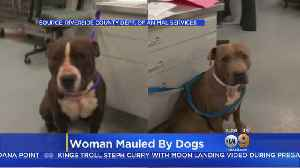 Owner Of Dogs Suspected Of Mauling Woman Arrested Over Outstanding Warrant [Video]