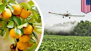 US approves the use of antibioticpesticides on citrus orchards [Video]