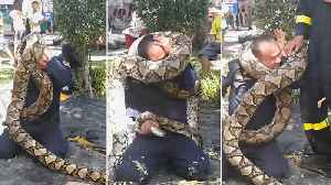 Fireman gets into a tight squeeze as python wraps itself around his head [Video]