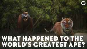 What Happened to the World's Greatest Ape? [Video]