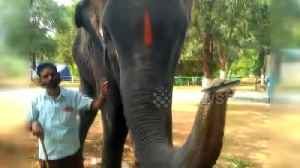 Elephant shows off harmonica-playing skills in India village [Video]