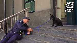 Police puppy's first mission is learning to walk down stairs [Video]