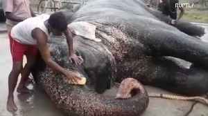 TONNES of fun! Indian temple elephants treated to 48-day spa [Video]