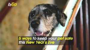 5 Ways to Keep Your Pet Safe and Stress-Free This New Year's Eve [Video]
