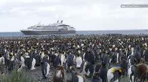 Tourists May Be Passing Human Diseases to Antarctic Penguins [Video]