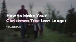 How to Make Your Christmas Tree Last Longer [Video]