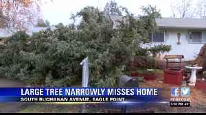 Massive tree falls from wind, narrowly misses home [Video]