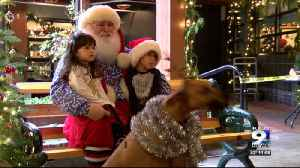 Pets take photos with Santa at 5th Street Public Market [Video]