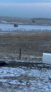 Unstoppable Hay Bales Caused by High Winds [Video]