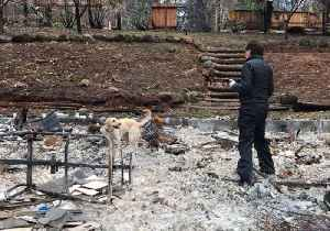 Canine Team Searches for Urns in Fire-Ravaged Town of Paradise [Video]