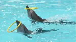 Scientists Suggest Bottlenose Dolphins Have Cliquey Social Circles Just Like People [Video]