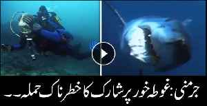 Shark clamps onto diver's leg as blood and screams pour out in attack video [Video]