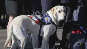 News video: Sully the service dog will head to a new adventure after the holidays