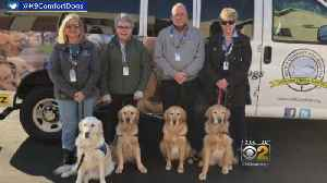 Comfort Dogs Available For CPD Officers In Need Following Deaths Of Two Officers Fatally Struck By Train [Video]