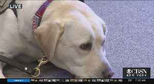 Presidential Service Dog 'Sully' Returns To Long Island [Video]