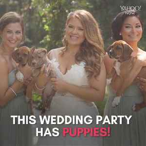Forget the bouquets, this wedding party has puppies [Video]