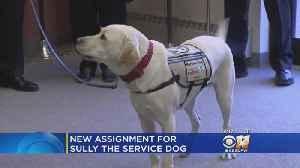 Presidential Service Dog Sully Returns To Long Island [Video]