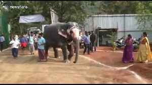 Two elephant friends have heartwarming reunion after a year apart [Video]