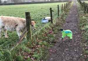Adorable Greyhound Makes Friends With Curious Calf [Video]