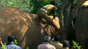 A killer elephant in India is captured by officials [Video]