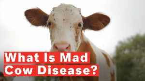 What Is Mad Cow Disease? [Video]