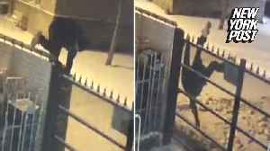 Worst thief gets stuck on fence twice in the same night [Video]