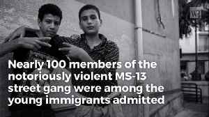 Flashback 99 MS-13 Gang Members Arrested – All Entered Us As 'Unaccompanied Minors' [Video]