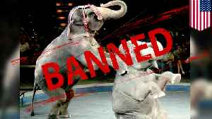 'Nosey's Law' bans animals from New Jersey circus acts [Video]