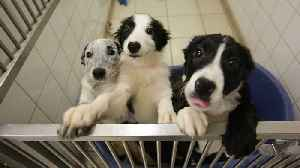 England Will Ban Pet Stores From Selling Puppies And Kittens [Video]