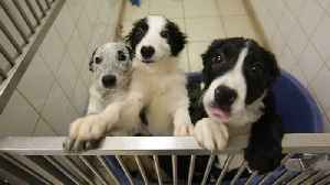 England to Ban Sales of Puppies, Kittens at Pet Stores [Video]