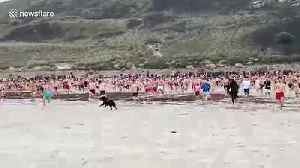 Taking the plunge: Hundreds run into sea near UK's Land's End on Christmas Day [Video]