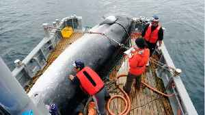 Japan To Restart Commercial Whaling [Video]