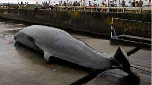 Japan To Resume Commercial Whaling [Video]