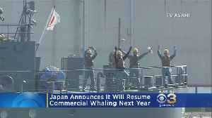 Japan Announces Commercial Whaling Will Continue Next Year [Video]