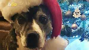 Dog Celebrates First Christmas at Forever Home After Nearly a Decade in a Shelter [Video]