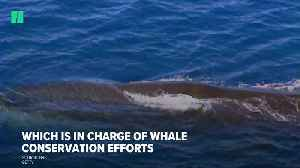 Commercial Whaling Returns To Japan [Video]